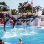 Four dolphins in a line jumping over a wire at Marineland Majorca