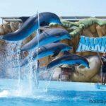 Dolpins jumping through hoops at Marineland Majorca