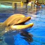 Dolpin popping its head out of the water at Marineland Majorca