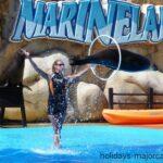 Seal jumping through a hoop at Marineland Majorca