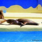 Seals sunbathing at Marineland Majorca