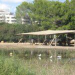 Horses for hire at Sa Coma Majorca
