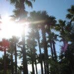 Palm tree silhouette in Sa Coma Majorca