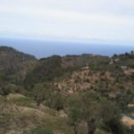Countryside views of Deia Majorca