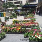 Flowers and other plants for sale at Inca market in Majorca