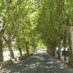 Tree lined road in Esporles Majorca